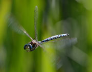 Face to face with a dragonfly
